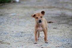 Cachorrinho pequeno Imagens de Stock Royalty Free