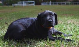 Cachorrinho pequeno Imagem de Stock Royalty Free