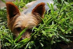 Cachorrinho pequeno bonito e peluches Fotografia de Stock Royalty Free