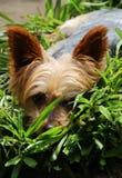 Cachorrinho pequeno bonito e peluches Imagens de Stock Royalty Free