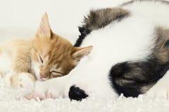 Cachorrinho pequeno e gatinho adormecidos Foto de Stock Royalty Free