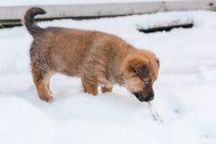 Cachorrinho pequeno no inverno O cão pequeno vai na neve Fotos de Stock Royalty Free