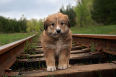 Cachorrinho pequeno triste bonito na estrada de ferro Fora foto Fotografia de Stock