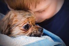Cachorrinho pomeranian do rapaz pequeno feliz e do cão pequeno após o banho fotos de stock royalty free