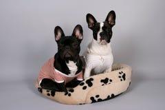 Cachorrinho preto e branco imagens de stock