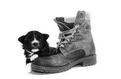 Cachorrinho preto no estúdio Imagens de Stock
