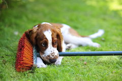 Cachorrinho que encontra-se na grama imagem de stock royalty free