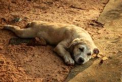 Cachorrinho que encontra-se na pedra Fotos de Stock Royalty Free