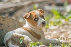 Cachorrinho que encontra-se na terra em Kolkata Fotos de Stock