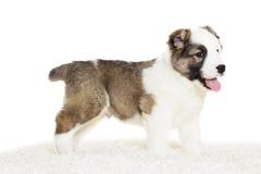 Cachorrinho que está lateralmente fotografia de stock