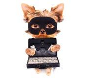 Cachorrinho que guarda o caso com dinheiro Fotografia de Stock