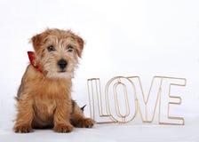 Cachorrinho que senta-se ao lado do amor da palavra Imagens de Stock
