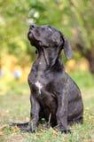 Cachorrinho que senta-se na grama Imagens de Stock Royalty Free