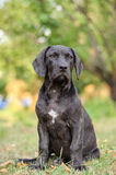 Cachorrinho que senta-se na grama Fotografia de Stock