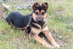 Cachorrinho que senta-se na grama verde imagem de stock
