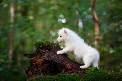 Cachorrinho ronco em uma floresta selvagem fotos de stock