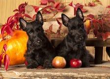 Cachorrinhos Fotos de Stock Royalty Free