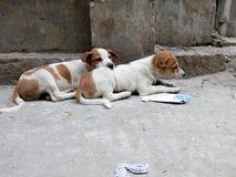Cachorrinhos ao lado da estrada imagens de stock royalty free