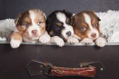 Cachorrinhos da árvore prontos para viajar fotografia de stock