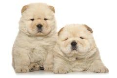 cachorrinhos da Comida-comida Imagem de Stock Royalty Free