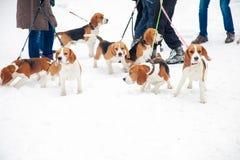 Cachorrinhos da empresa para uma caminhada Imagens de Stock Royalty Free