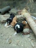 Cachorrinhos do sono Fotografia de Stock