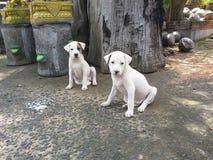 Cachorrinhos dos gêmeos de Cutie fotografia de stock