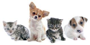 Cachorrinhos e gatinho fotografia de stock royalty free