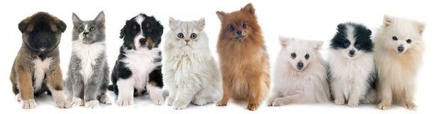 Cachorrinhos e gatinho fotos de stock