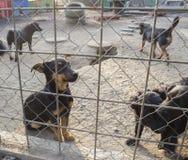 Cachorrinhos em um abrigo imagens de stock