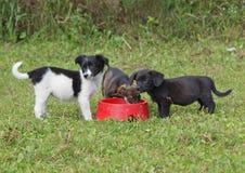 Cachorrinhos em uma calha de alimentação com uma refeição Imagem de Stock