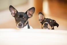 Cachorrinhos fora da cuba Fotografia de Stock