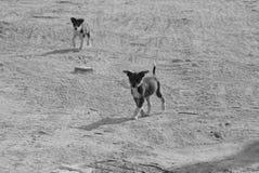Cachorrinhos pequenos que correm na estrada imagem de stock royalty free