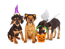 Cachorrinhos vestidos para Dia das Bruxas Fotos de Stock Royalty Free