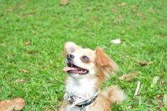 Cachorro fotografia stock libera da diritti