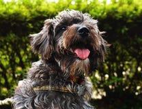 Cachorro Stock Photo