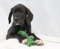 Cachorro de mentira con la cuerda Foto de archivo libre de regalías
