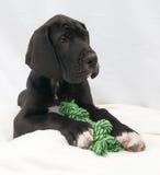 Cachorro de mentira con la cuerda Foto de archivo
