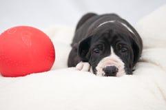 Cachorro de mentira y bola Imagen de archivo libre de regalías