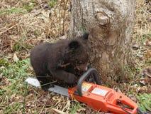 Cachorro de oso Fotos de archivo libres de regalías