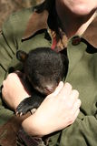 Cachorro de oso negro Fotografía de archivo