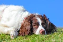 Cachorro quente preguiçoso Fotos de Stock