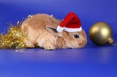 Cachorro rojo decorativo de un conejo Imagen de archivo