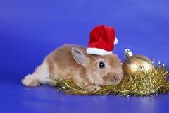 Cachorro rojo decorativo de un conejo Foto de archivo libre de regalías
