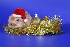 Cachorro rojo decorativo del conejo Imagen de archivo libre de regalías