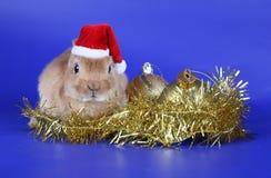 Cachorro rojo decorativo del conejo Foto de archivo