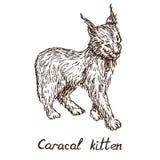 Cachorro rojo del gato, del rooikat, rojo o persa de Caracal del lince del gatito libre illustration
