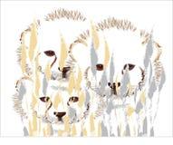 Cachorros del guepardo Fotos de archivo libres de regalías