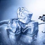 Cachorros del hielo Imagen de archivo libre de regalías