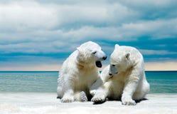 Cachorros del oso polar en una playa del invierno Imagen de archivo libre de regalías